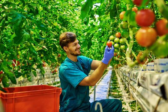 Top_story_b783a6cafaaf290a3c96_tomato_farmer