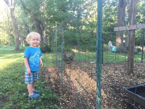 Top_story_bbe21b45df763473f1d2_backyard_chicken_with_kid