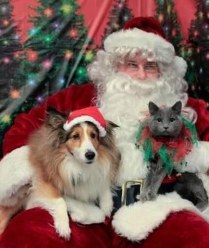 Top_story_bde0d37df6a92ab91b68_c9bd959303f4cc0150c6_cat_and_dog_with_santa