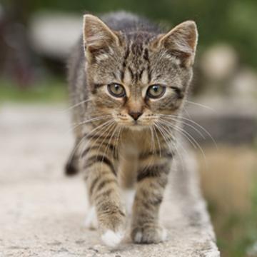 Top_story_c624c099da026ef5805b_feral-kitten