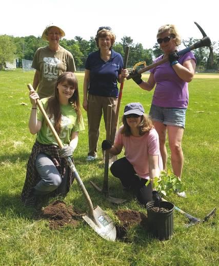 Top_story_c6c57f2f20e3acbf62dc_meisel_tree_planting