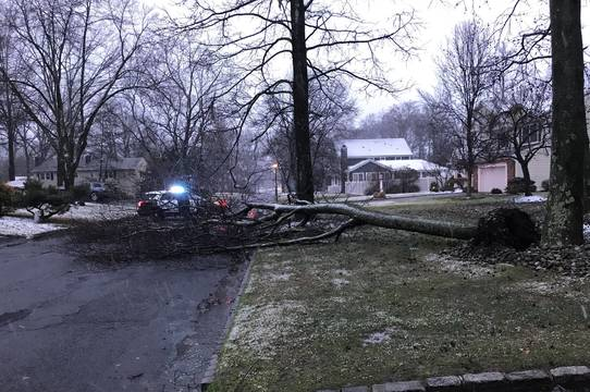 Top_story_c7a64927f122c66fa2c5_ddd0475057c7f17d0a47_tree_down_grove_st_and_clifton