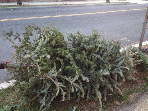 Top_story_d4a15debd92d9cc68622_christmas_tree