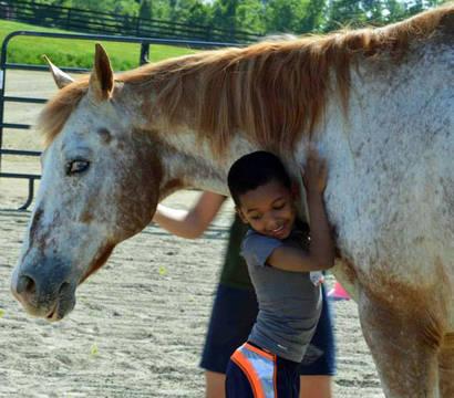 Top_story_da5836e11e29b821ed20_sprin_therapy_horse