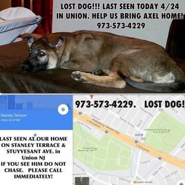 Top_story_de2341041302370033f6_92c45dba537078262d1f_missing_dog_-_axel