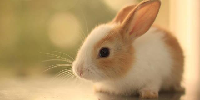 Top_story_f031709f8b540e52d3c5_bunny