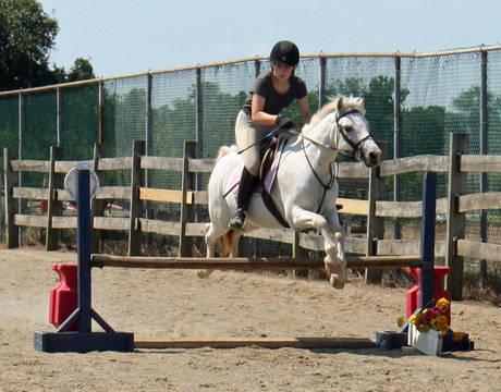 Top_story_f473c743a4587d4a0d92_senior_horse
