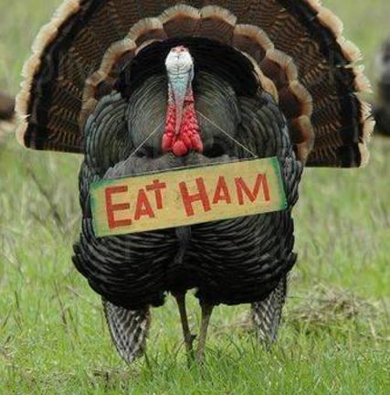 Top_story_ffeb02aed9e7af15e918_691800383ff98fe3127d_eat-ham-turkey