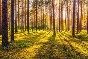 Carousel_image_7e617e26ba0229fa4f41_trees_3